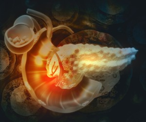 graphic image of a pancreas